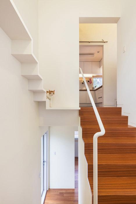 Gato sobre su propia escalera que le lleva a su propio loft en una casa de los arquitectos OBBA.