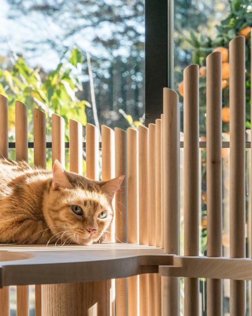 Katze im Katzenmöbel Neko Sonne scheint durch Holzstruktur