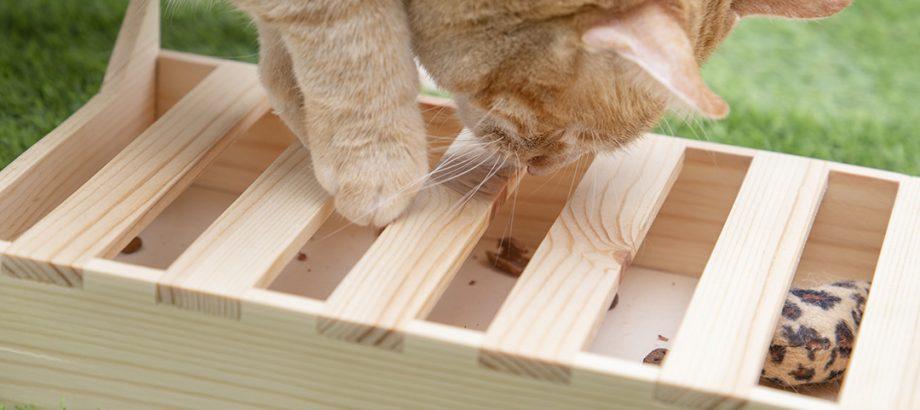 cajita-de-juego-gato-jugando