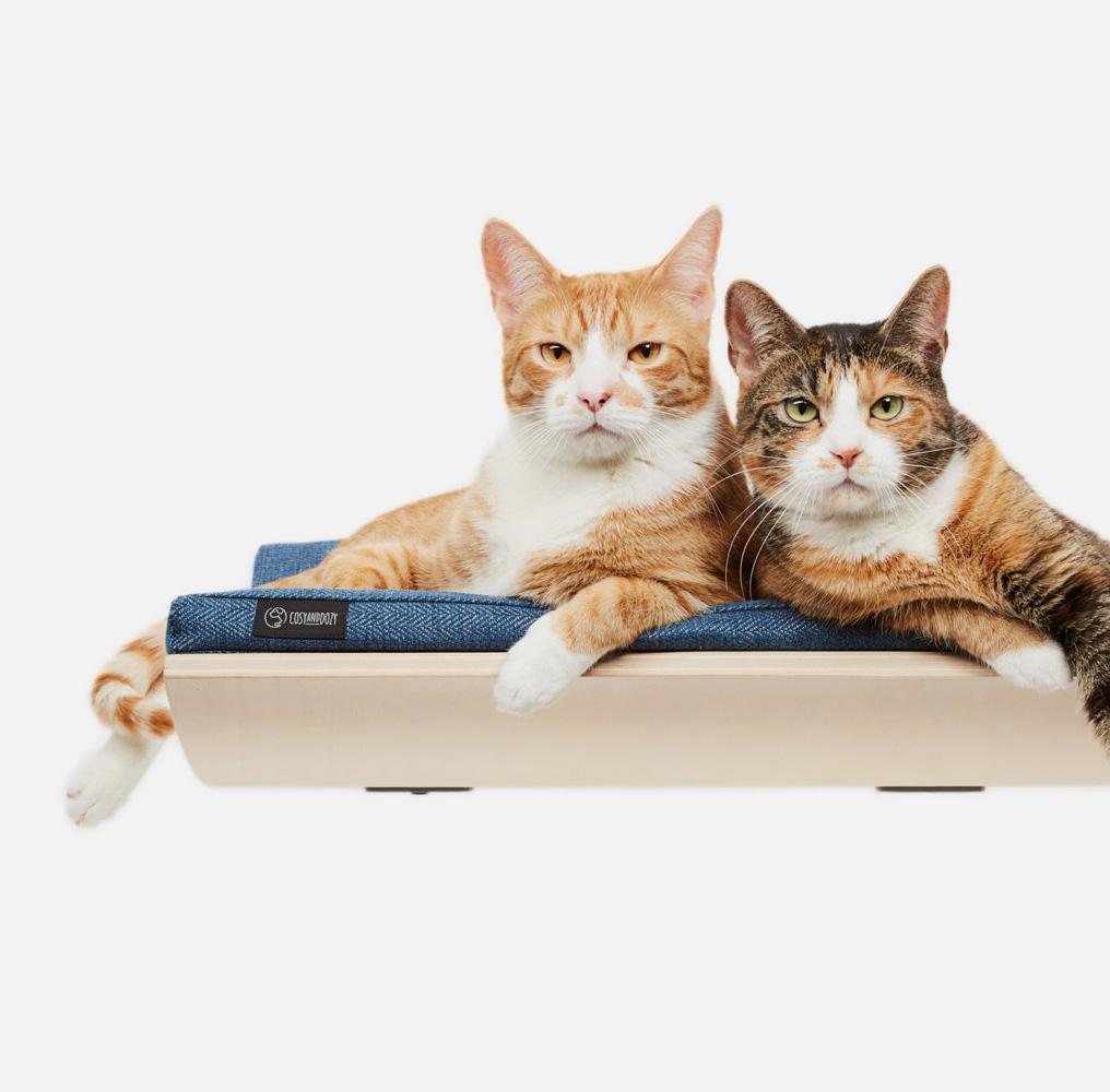 gatos en un estante elevado