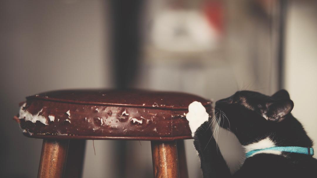 Gato arañando, rascando un taburete mueble