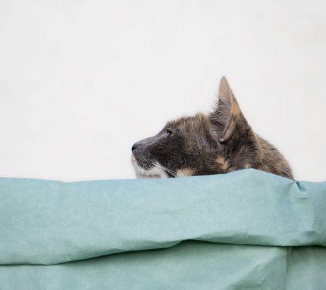 gato-descansando-cesto-de-papel