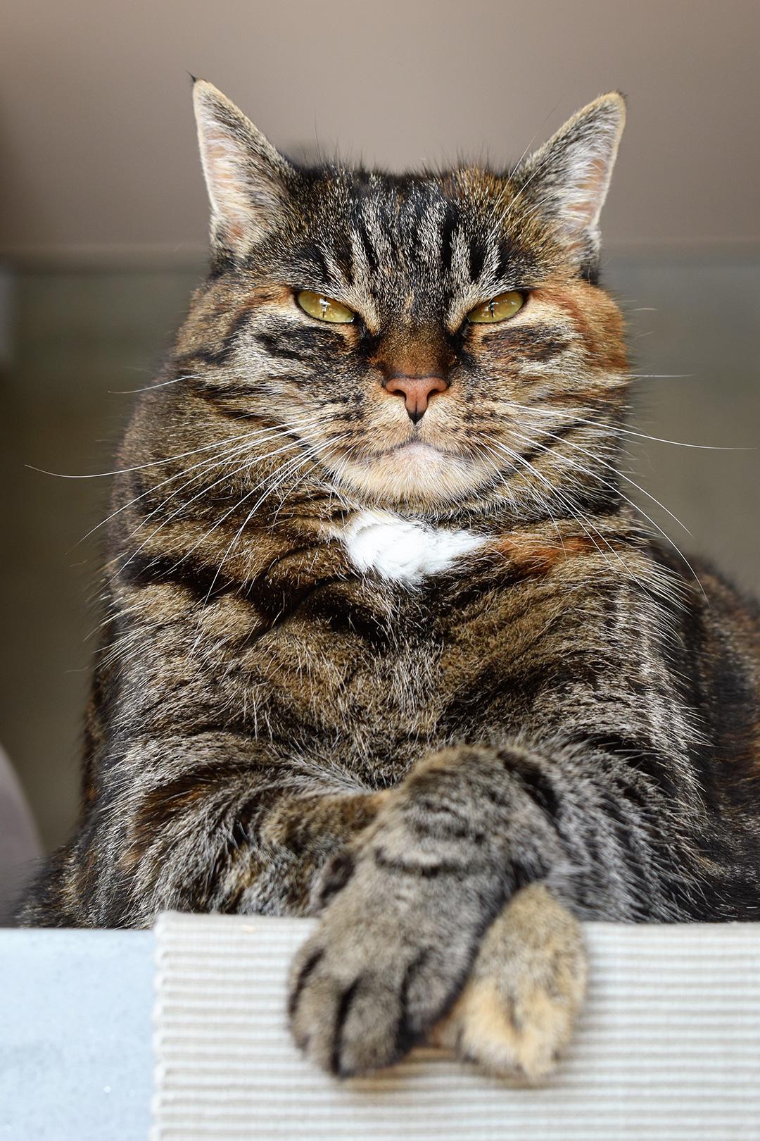Gato subido a un mueble
