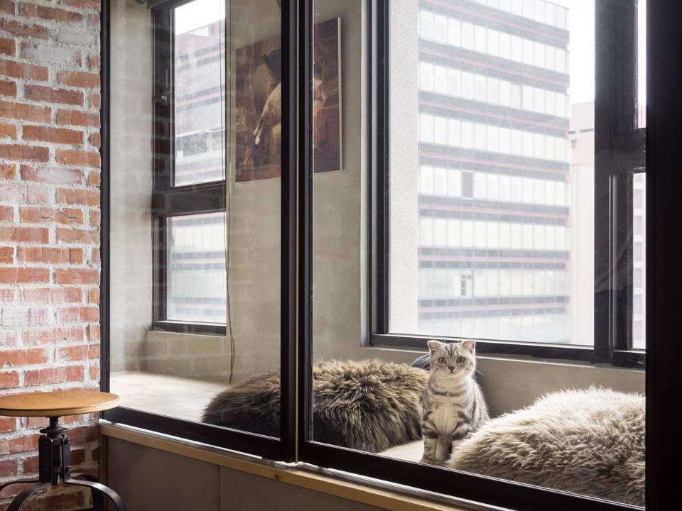 gato en el wintergarden de la recall casa de haodesign