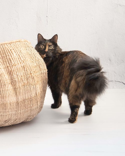 huge basket for cats MEETING POINT handmade of palm leaves with cat looking at it